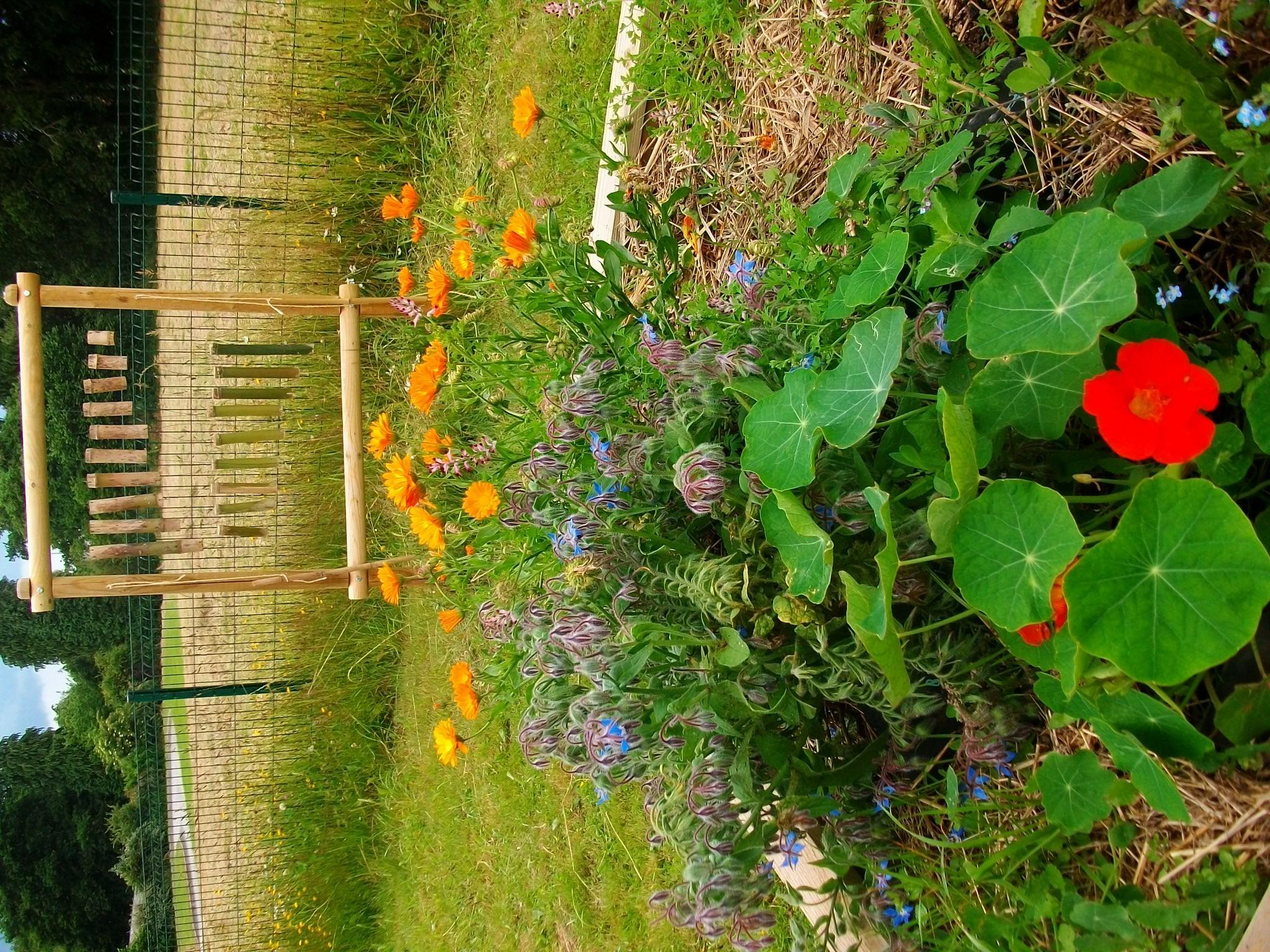 Accompagnement projet jardin des graines et des brouettes for Autour du jardin