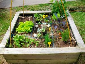 Jardin en carrés à l'école St André à Surzur