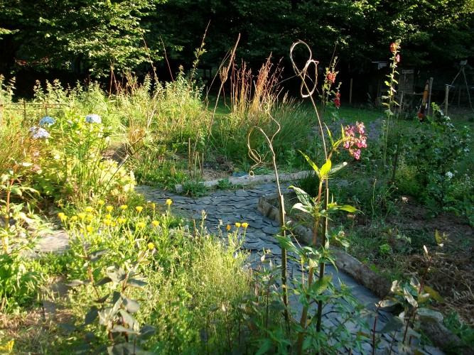 Balades-ateliers découverte des plantes sauvages comestibles et médicinales