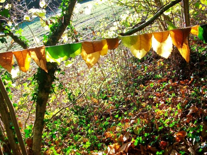 """NOUVEAU : sorties et ateliers mensuels """"A la rencontre des arbres et plantes sauvages au fil des saisons"""""""