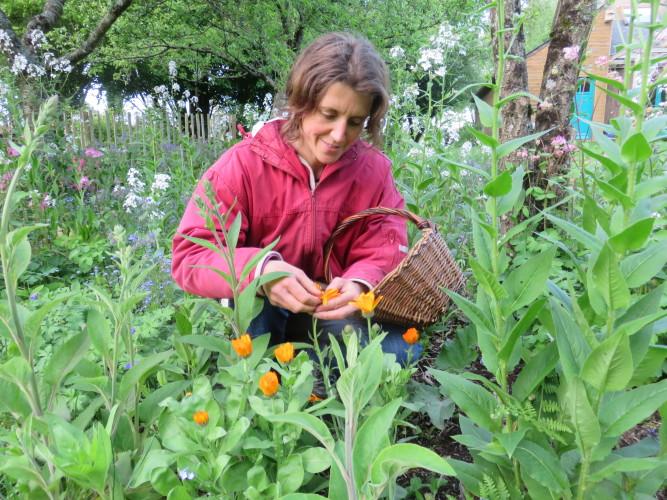 Ateliers et sorties plantes sauvages printemps et été  2019