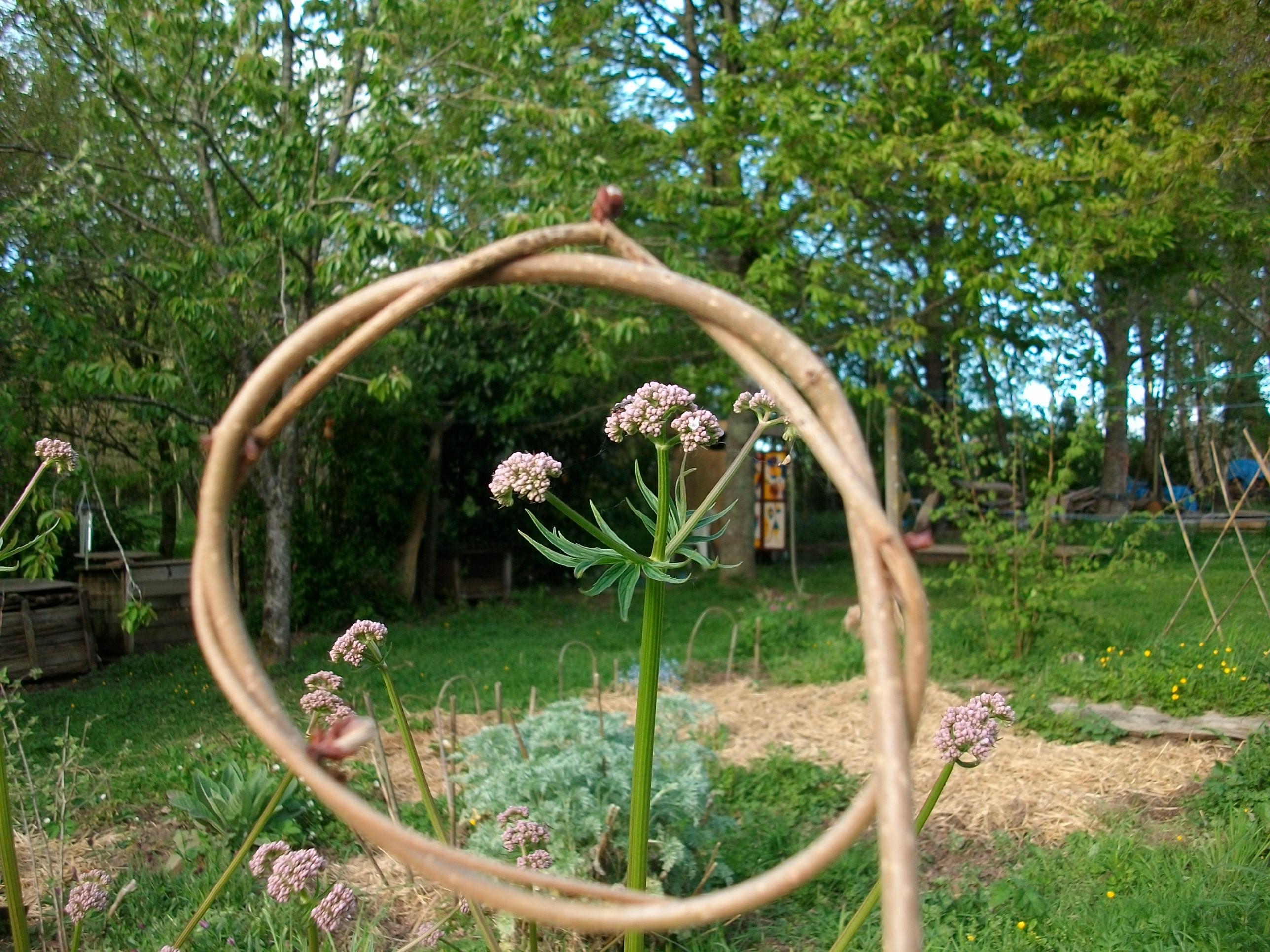 Balade nature plantes sauvages comestibles et médicinales