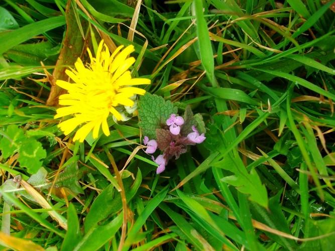 S'accorder à l'énergie naissante du printemps avec les plantes et les pierres