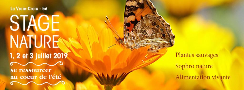 Stage nature se ressourcer au cœur de l'été